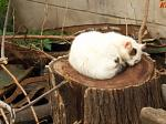 A cat having a nap on a big stump